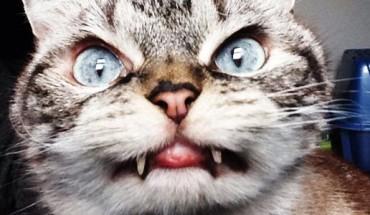 Ten kot ma najbardziej złowieszczy wyraz pyszczka na świecie. Poznajcie Lokiego — kota wampira!