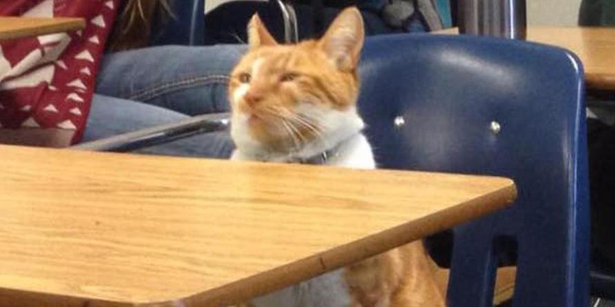 Ten kot od kliku lat uczęszcza do szkoły. Zobaczcie jak się tu zaaklimatyzował!