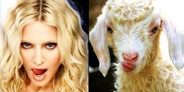 Te znane osobistości mają swoich sobowtórów w świecie zwierząt! Zobaczcie podobieństwa, na widok których trudno się nie uśmiechnąć!
