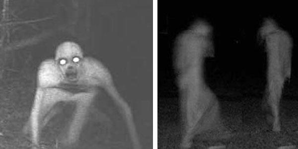 13 dziwnych rzeczy, które kamery zarejestrowały w okolicach lasów. Numer 12 jest przerażający!