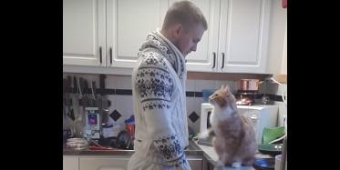 Ten kot łamie wszelkie stereotypy, jest taki słodki, że nie mogę przestać oglądać tego filmiku!