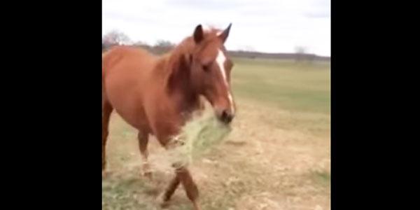 Powód, dla którego ten koń niesie w pysku siano, jest przepiękny... Zobacz, dla kogo się tak poświęca!