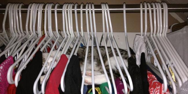 28 kotów, które znalazły sobie idealne miejsce do spania!