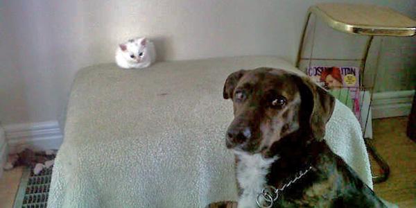 Te psy w ogóle nie potrafią walczyć o swoje!