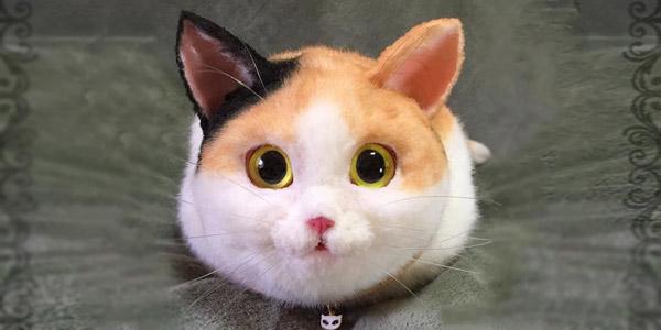 Tego kota możesz zabrać, gdzie tylko chcesz... nie zgadniesz dlaczego!