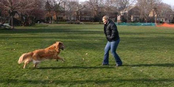 Wszystkie psy idą do nieba! Historia tych przyjaciół jest tego doskonałym przykładem!
