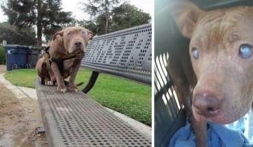 Ta ślepa suczka została porzucona w parku, po porodzie… Teraz szuka kochającego właściciela!
