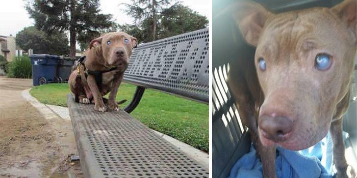 Ta ślepa suczka została porzucona w parku, po porodzie... Teraz szuka kochającego właściciela!