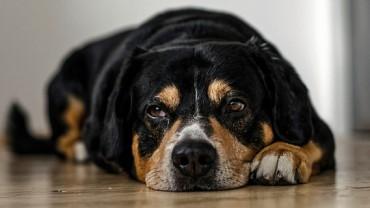 Właścicielka psa po przeczytaniu karteczki przyczepionej do obroży pupila, oniemiała…