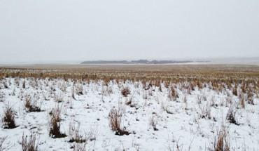 Na tym zdjęciu jest 550 owiec. Potrafisz je odnaleźć?