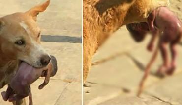 Ten głodny pies złapał noworodka w pysk i zrobił coś, czego nikt się nie spodziewał! Ta historia mogła mieć całkiem inne zakończenie…