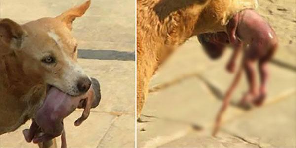 Ten głodny pies złapał noworodka w pysk i zrobił coś, czego nikt się nie spodziewał! Ta historia mogła mieć całkiem inne zakończenie...