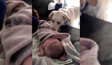 Kamera nagrała, co pies zrobił ze śpiącym dzieckiem. To niesamowite!