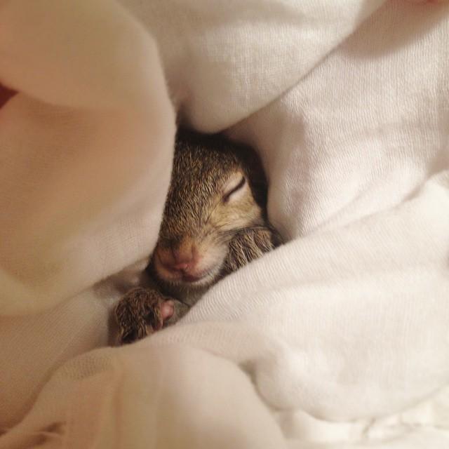 06-rescue-squirrel-hurricane