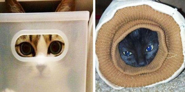 20 kotów, które schowały się w bardzo dziwnych miejscach. Numer 6 najlepszy!