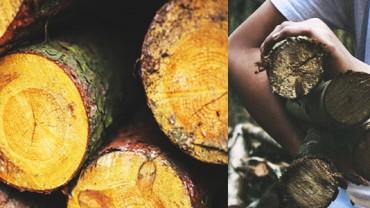 Ta kobieta zbiera konary powalonych drzew i robi z nimi coś fantastycznego! Niesamowite, co na nich powstaje!