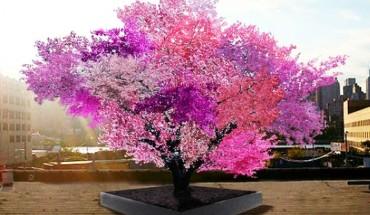 Na tym drzewie rośnie 40 różnych owoców. Myślisz, że to niemożliwe? A jednak!