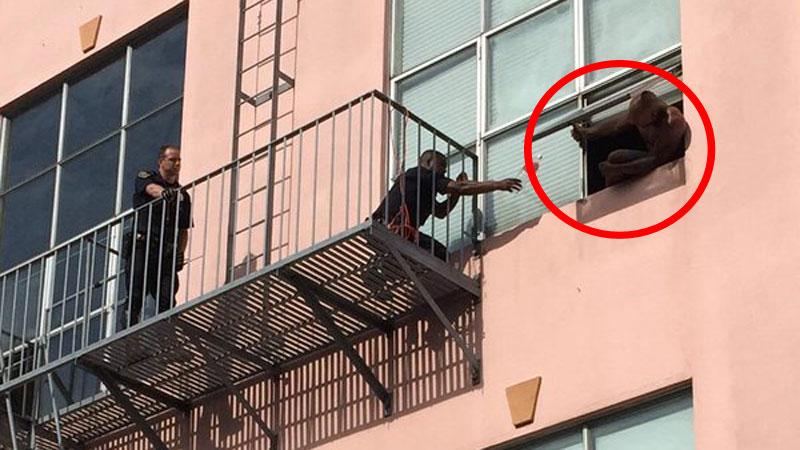 Ten facet wyszedł na parapet i chciał skoczyć z bloku, wtedy policjant przyniósł mu kota... Zobaczcie, co wydarzyło się później!