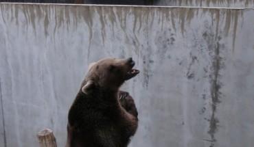Niedźwiedzie żyły w betonowych dołach. Na szczęście z pomocą im przyszła PETA!