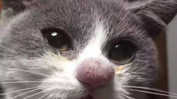 Kot ugryziony przez pszczołę. Wygląda zabawnie, ale może to mieć poważne konsekwencje!