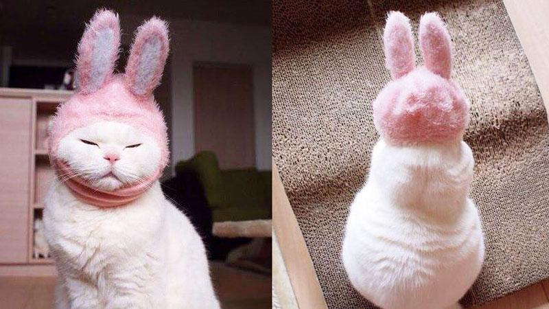 Zobaczcie 17-letnią kotkę, na której punkcie oszalała cała Japonia! To podobno najbardziej leniwa gwiazda internetu!