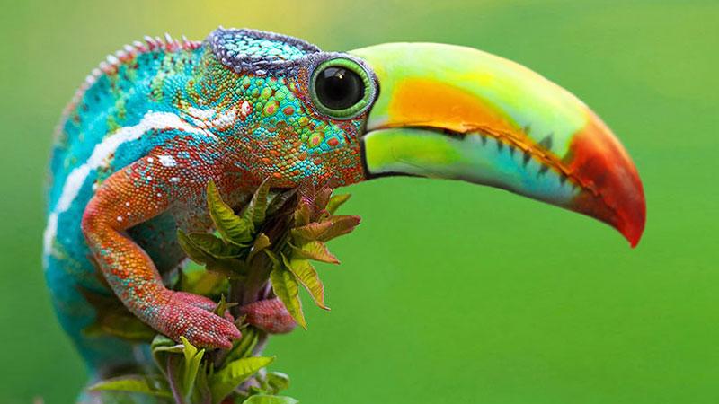 Niesamowite hybrydy zwierząt, które trzeba zobaczyć! Numer 10 najlepszy!