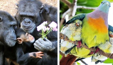 Zwierzęce rodziny w obiektywie aparatu. Zobacz zdjęcia, które pobiły internet!