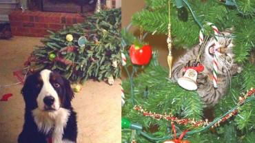 20 zwierzaków, które postanowiły zrujnować święta!