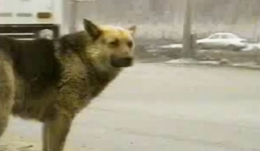 Z tragicznego wypadku wyszedł cało tylko pies. Gdy się dowiedziałam, co zdarzyło się później, wzruszyłam się do łez