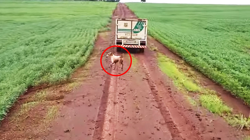 Ten pies biegł za samochodem 16 kilometrów. Powód, dla którego to zrobił, jest niezwykle wzruszający