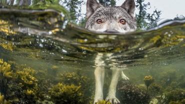 Najpiękniejsze zdjęcia 2015 wybrane przez National Geographic! Zobacz, co zachwyciło ich w tym roku.