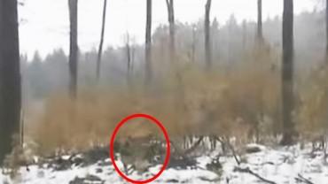 To miał być zwykły spacer z psem po lesie. Nagle zwierzę wyczuło coś, czego racjonalnie nie da się wyjaśnić!