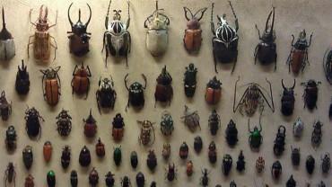W tym muzeum nie pracują sami sztywniacy :)