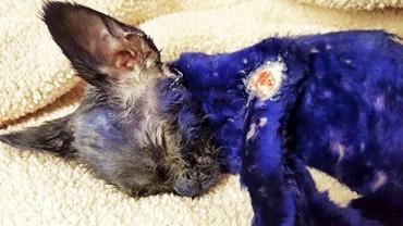 Ten fioletowy kotek był żywym gryzakiem dla agresywnych psów! Ta historia mogła skończyć się tragicznie…