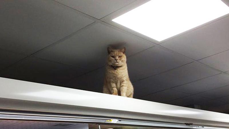 Poznaj Olla Olivera, kota uważającego się za właściciela sklepu.