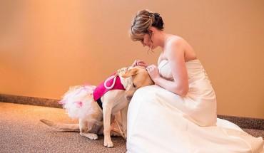 Wspaniały pies uspokaja swoją panią, gdy ta stresowała się na ślubie!