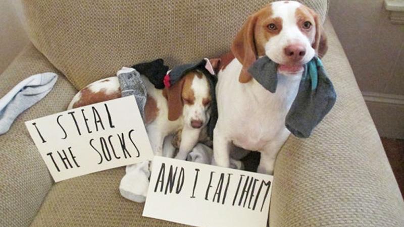 Zobacz słodkie zwierzaki i ich małe zbrodnie ;)