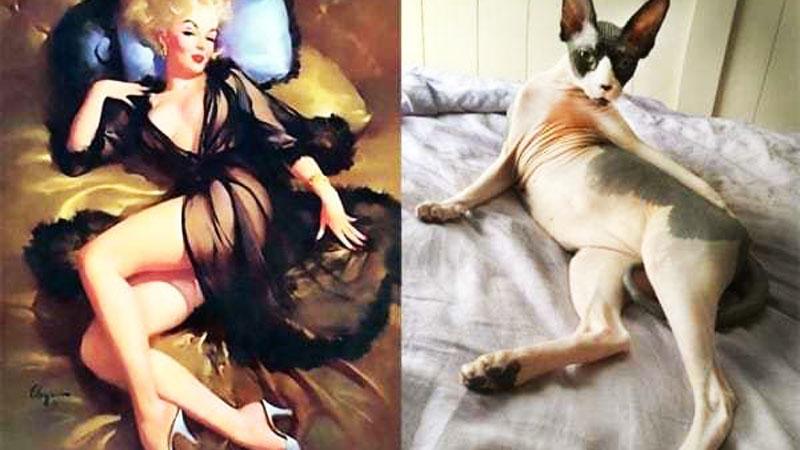 Koty, które wyglądają jak pin-up girl! Zestawienie, które z pewnością wywoła uśmiech na twojej twarzy!