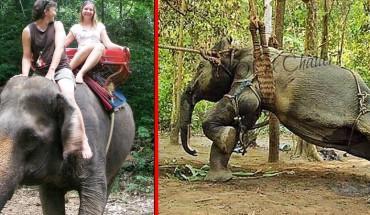Uśmiechnięci turyści siedzą na słoniu. Nie mają pojęcia, co zwierzę musiało przejść, by mogli na niego wejść!