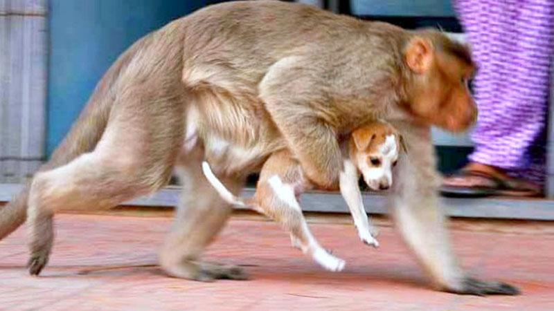 Małpa znalazła na ulicy porzuconego szczeniaka. To, co wydarzyło się później, jest przepiękne!
