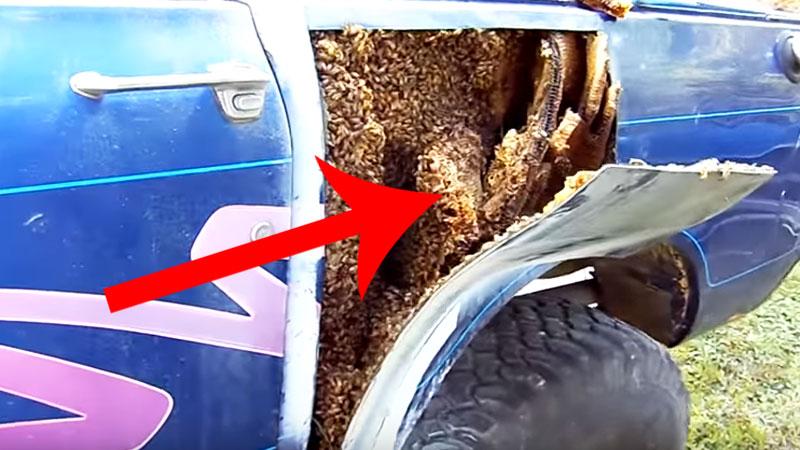 Gdy ten facet odebrał z warsztatu swój samochód, nie spodziewał się tego, co znajdzie w środku! Był zszokowany tym, co zobaczył!