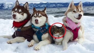 Pies Husky znalazł porzuconego i wycieńczonego kociaka. Ku zaskoczeniu wszystkich nie zrobił mu krzywdy, lecz zaoferował pomoc