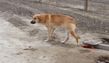 Na polnej drodze stał samotny pies. Czekał na człowieka, który miał nigdy nie wrócić…