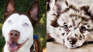 Niesamowite połączenia ras psów, które dają naprawdę niezwykłe rezultaty