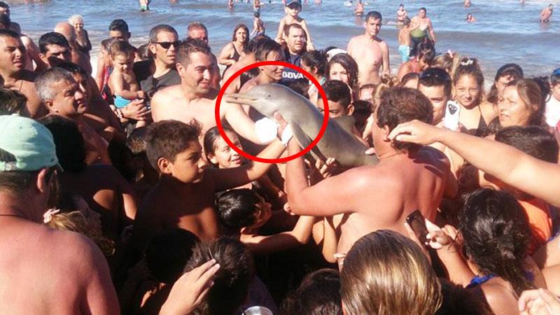 Turyści przez swoją lekkomyślność zabili delfina na plaży. Każdy chciał zrobić sobie z nim zdjęcie...