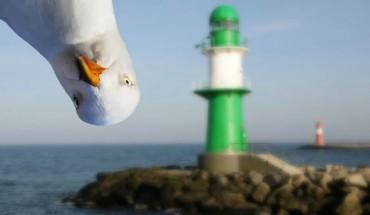 Najlepsze fotobomby w wykonaniu ptaków! Mają wyczucie