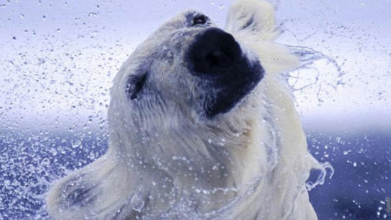 20 niedźwiedzi, które zachowują się jak ludzie. Zazdroszczę czwartemu sprawności fizycznej! :D