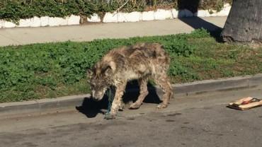 Weterynarze z pogotowia dla zwierząt otrzymali zgłoszenie o psie błąkającym się po ulicy. Gdy przybyli na miejsce, nie mogli wyjść z szoku