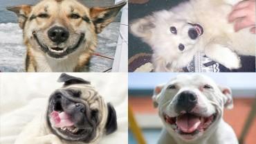 Tych 8 faktów przekona cię, że warto pokochać psa!