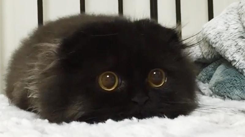 Poznaj Gimo, nowego ulubieńca Internetu. Uważaj, bo zakochasz się w jego niesamowitych oczach!
